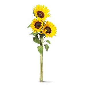 SPAR zonnebloemen