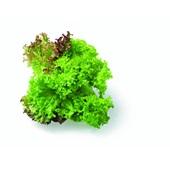 sla salanova trio achterkant