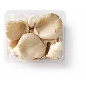 oesterzwammen voorkant