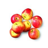 appel pinova voorkant