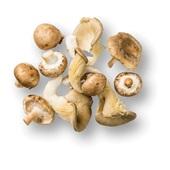 paddenstoelenmix voorkant